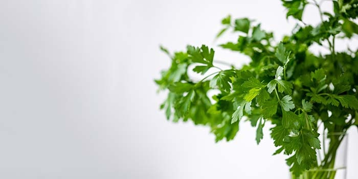 cultivar hierbas aromáticas-
